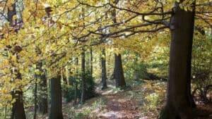 Otoño en el bosque, Löwenburg