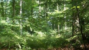 Primavera en el bosque, Löwenburg