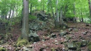Bosque de talus, Lohberg, Siebengebrge